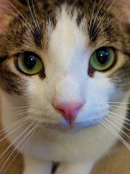 zadarmo Mačička lízanie obrázok