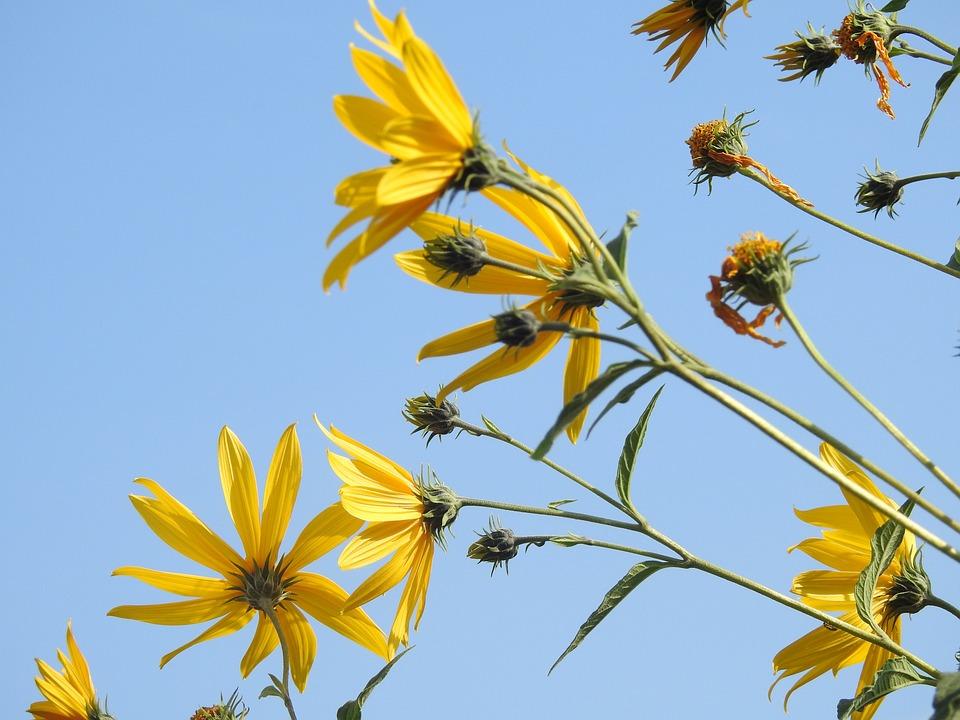 Pianta Fiori Gialli.Fiore Giallo Pianta Foto Gratis Su Pixabay