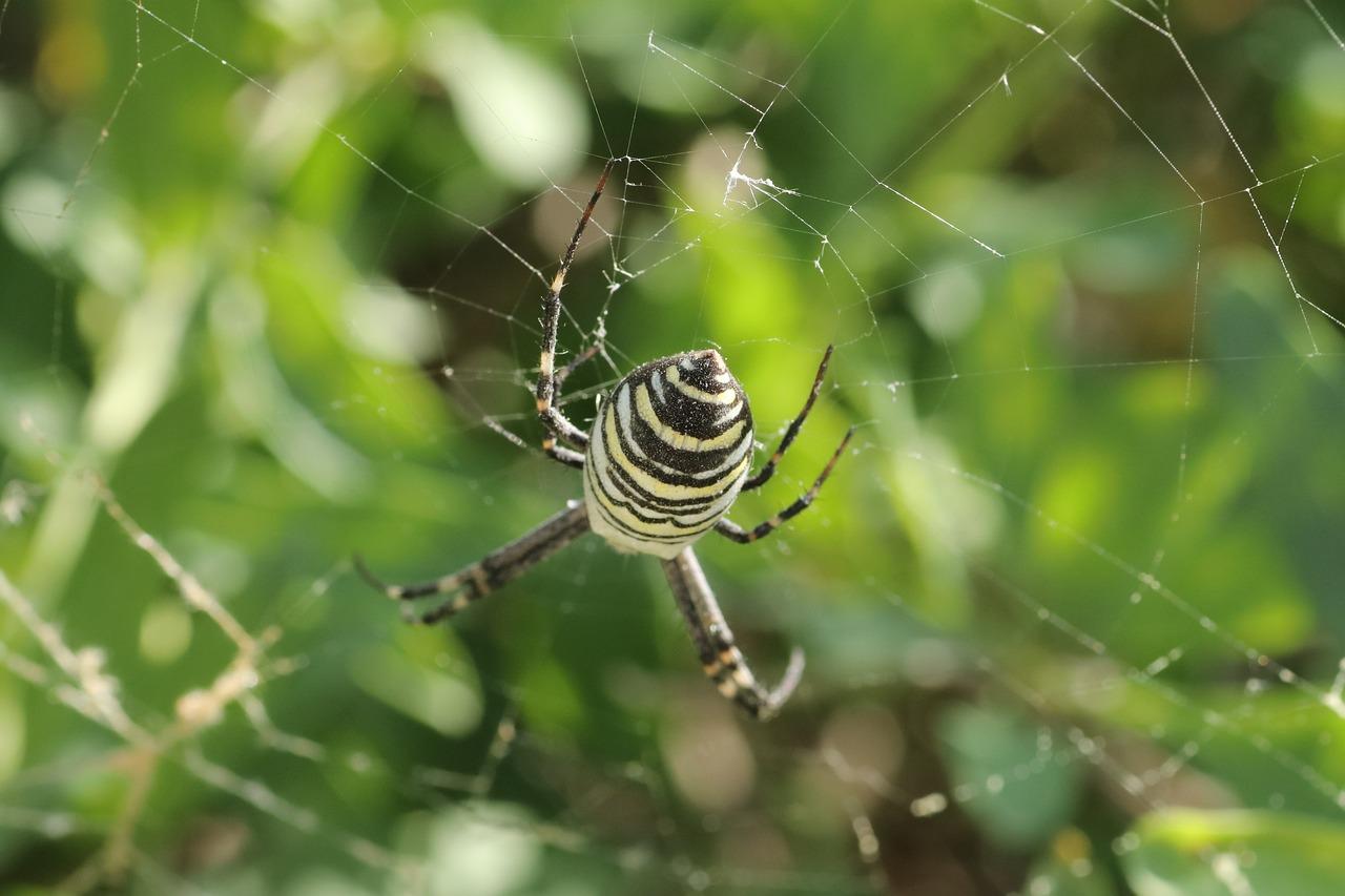 Spider Wasp Poisonous Free Photo On Pixabay