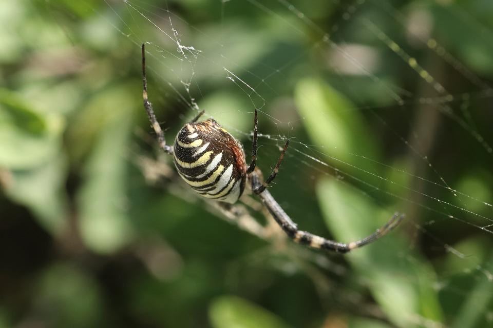 Spider Poisonous Summer Free Photo On Pixabay