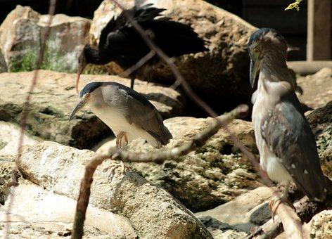 μεγάλο πουλί DPμαύρο εργένικο σεξ βίντεο