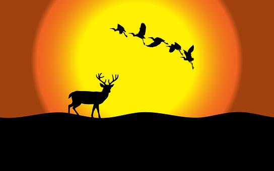 Sun, Deer, Sunset, Birds