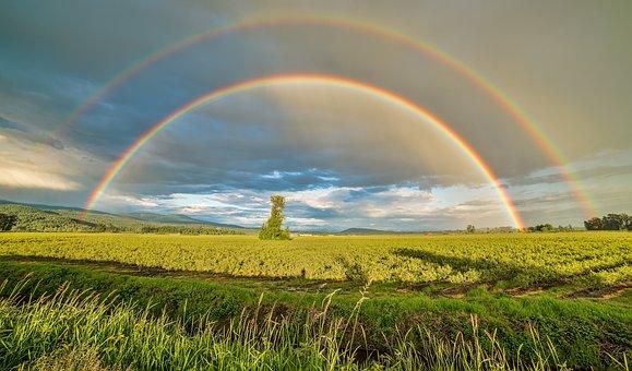 ブリティッシュ コロンビア州, カナダ, ファーム, 農地, 風景, 牧草地