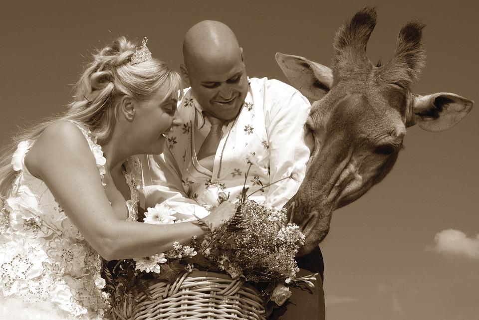 0ba42c13a04d Bröllop, Äktenskap, Brud, Kärlek, Kvinna, Gifta Sig Med