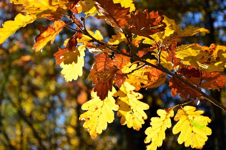 вас нашем осень картинки листья дуба современных условиях
