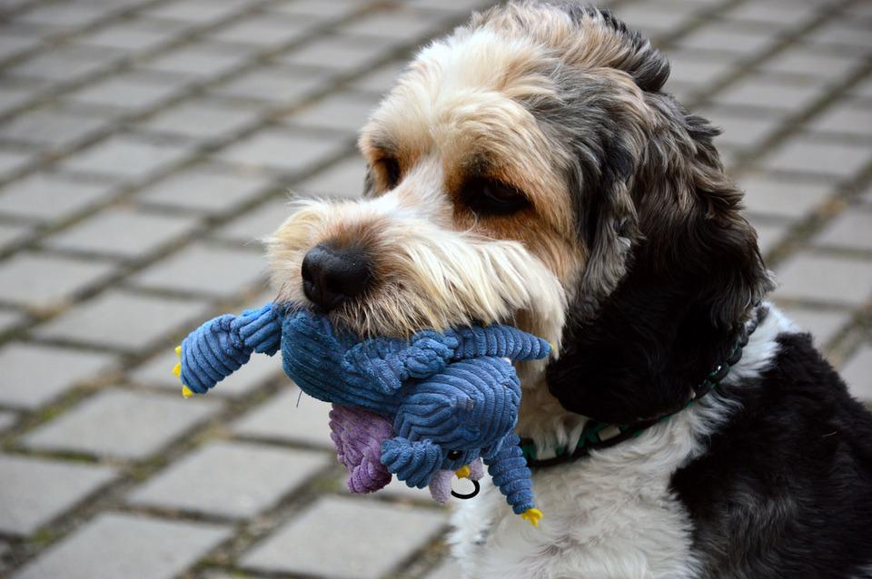 Hund, Tier, Haustier, Mischling, Mischlingshund, Rüde