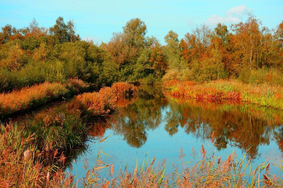 Pond, Banks, Vegetation, Tree, Reflection, Landscape