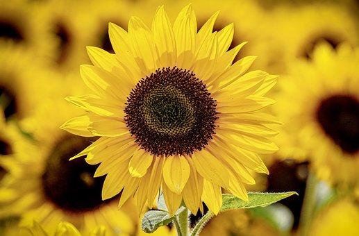 Download 960 Background Hewan Kuning Terbaik