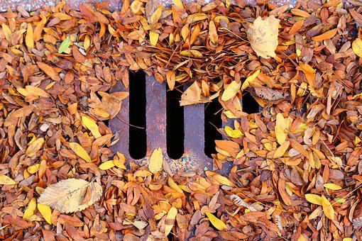 Leaf, Leaves, Fall, Sewer, Drain, Grid