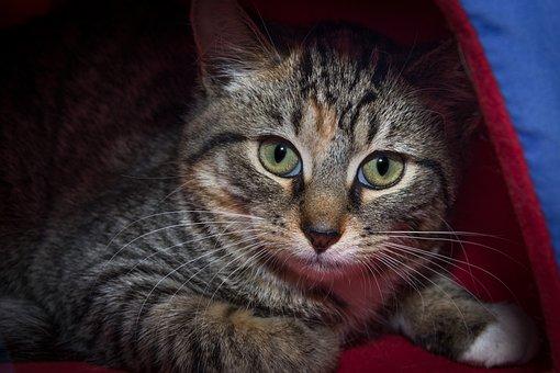 mačička zozadu obrázky