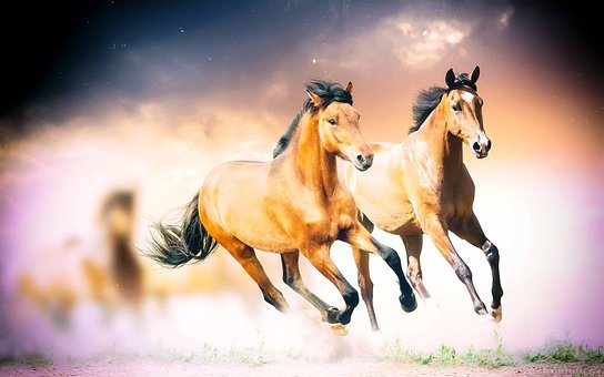 Horses, Wild Horses, Animals, Wild