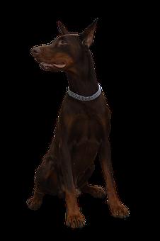 200+ Free Guard Dog & Dog Images - Pixabay