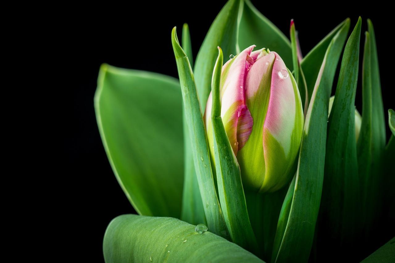 корзинке постеры с зелеными тюльпанами японская