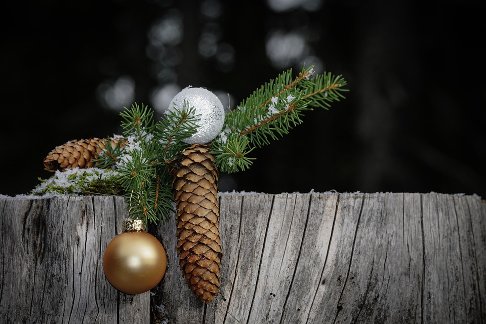 Immagini Natale Natura.Natale Ramo Natura Foto Gratis Su Pixabay
