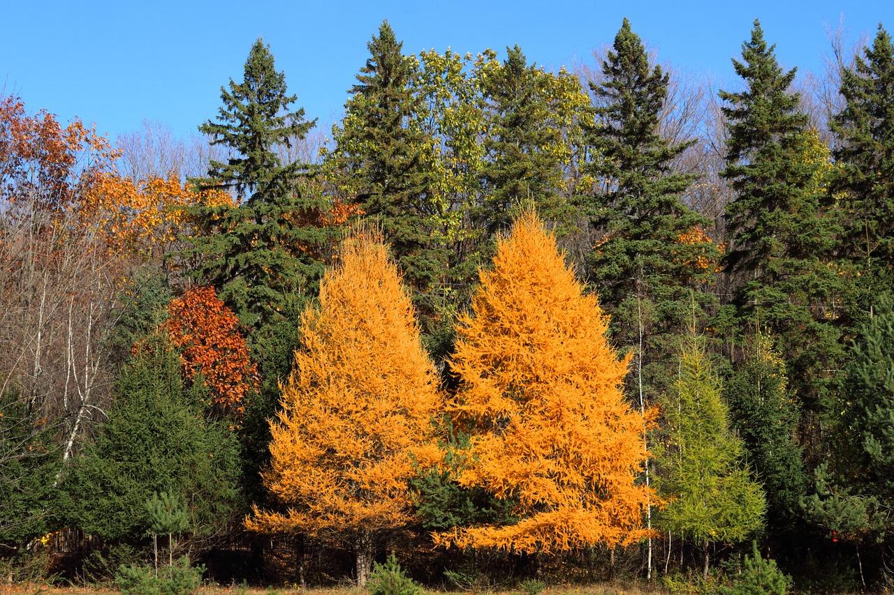 рокарий своими фото лиственничный лес этого, судя