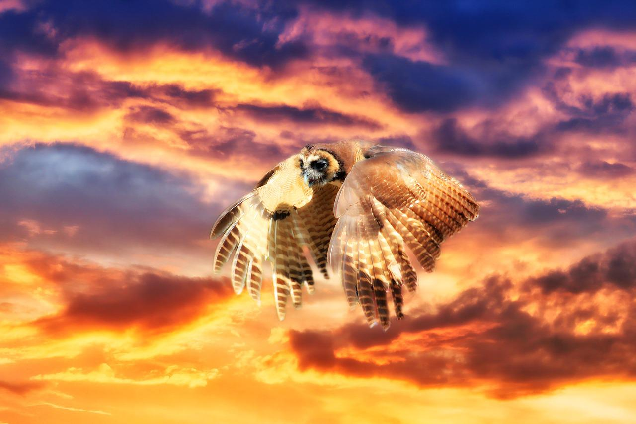 Картинка сова закат