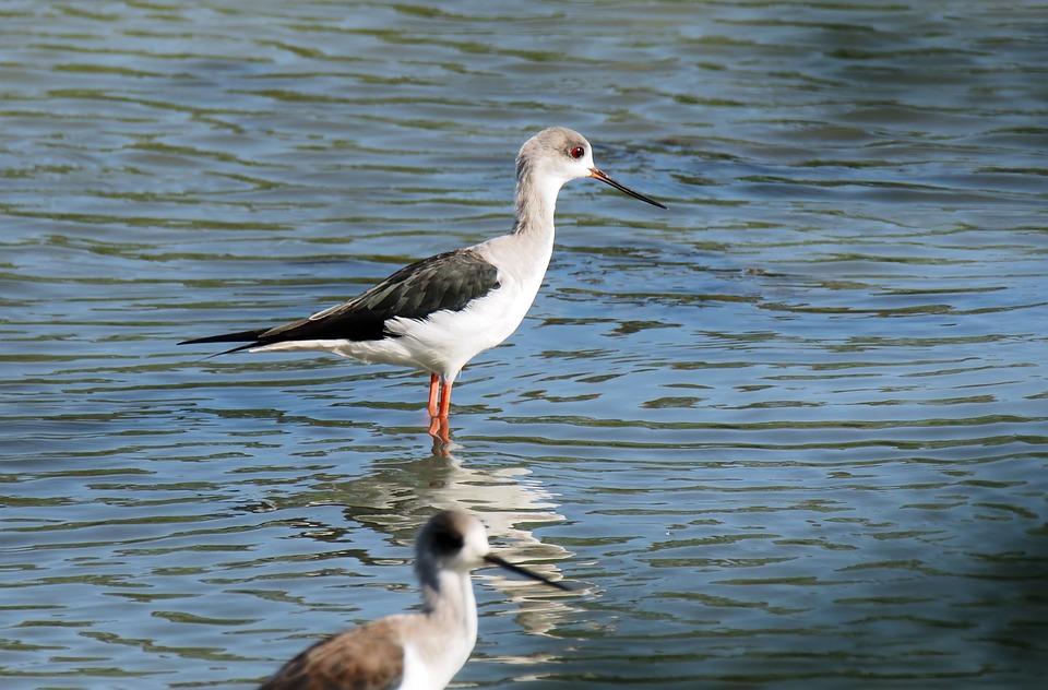 018c8575b Venkovní Pták Divoká Volně - Fotografie zdarma na Pixabay