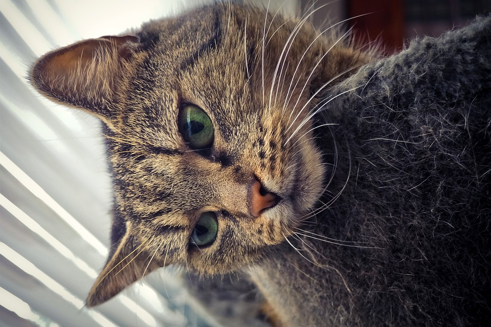 ca5d875ca637 Ζώο Γάτα Κατοικίδιο Άγρια - Δωρεάν φωτογραφία στο Pixabay