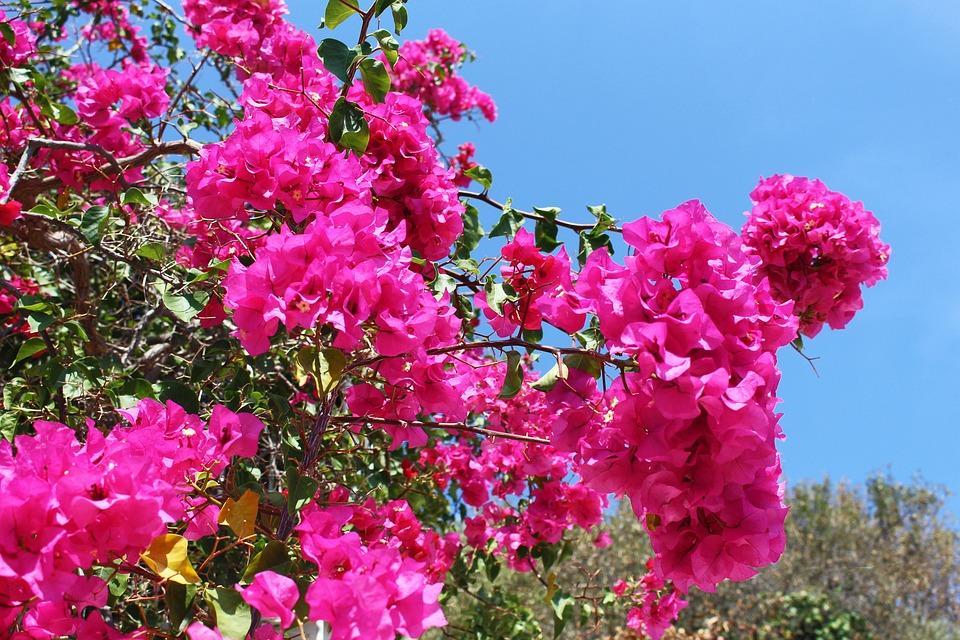 вас рождеством цветы греции фото и названия помогает выжить