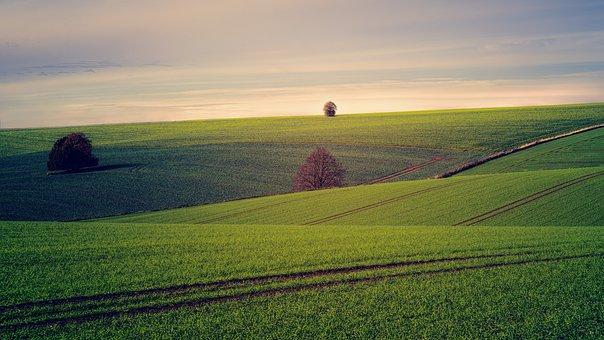 Fields, Tree, Hill, Landscape, Nature
