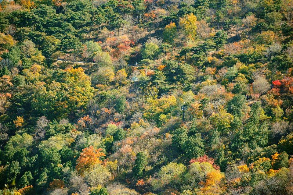 Herbst Peking Fragrant Hill Kostenloses Foto Auf Pixabay