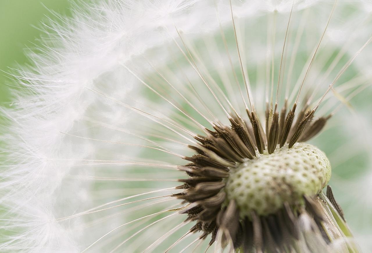 фото летящих семян вот теперь