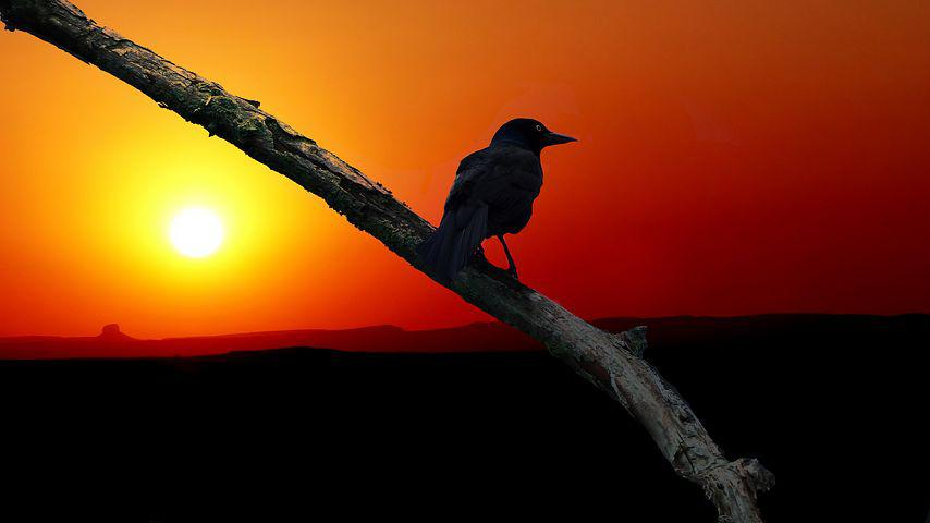 Картинки птицы солнце природа