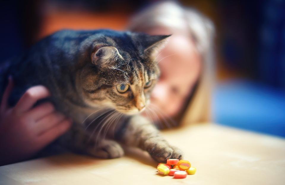 mladé sladké kočička fotky