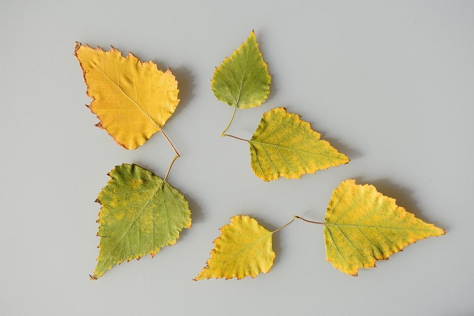 Blatt Blätter Gelb Kostenloses Foto Auf Pixabay