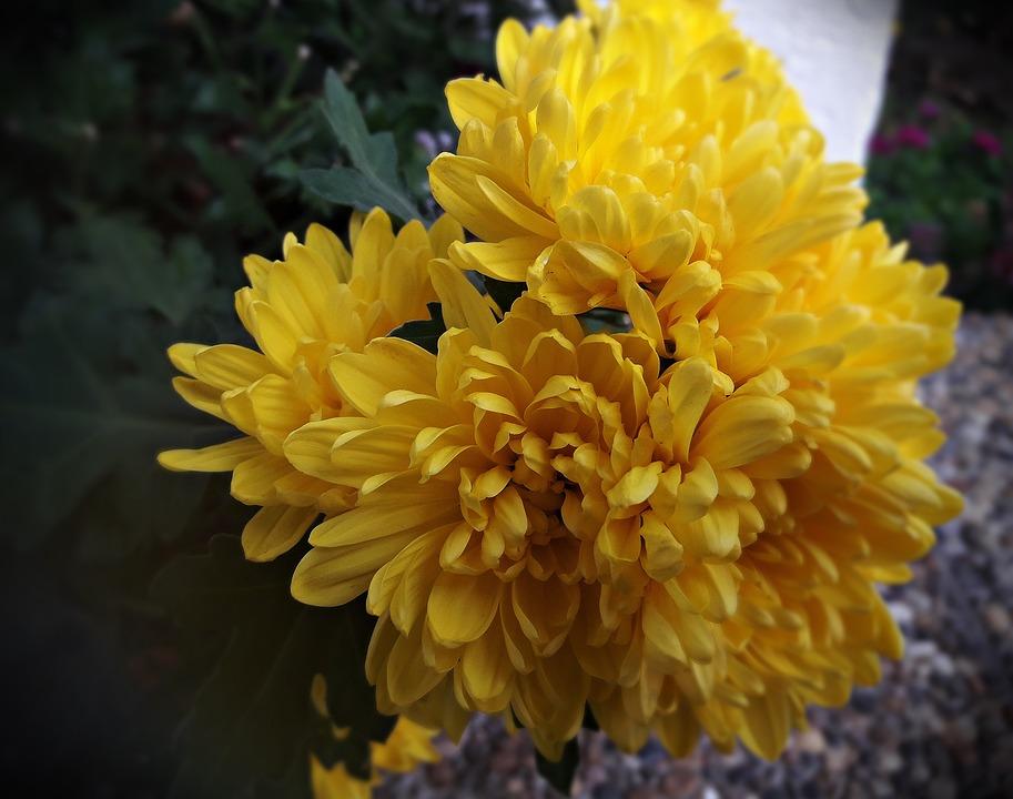 Fleurs Jardin Jaune - Photo gratuite sur Pixabay