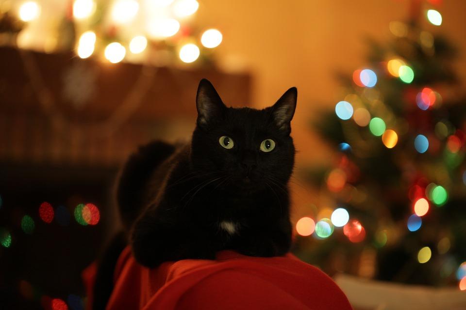 Новогодний Кот, Кот, Рождество, Ёлка, Праздник