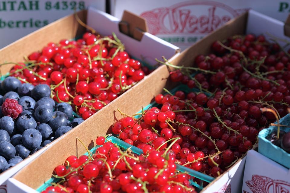 De Vară Fructe Padure Fotografie Gratuită Pe Pixabay