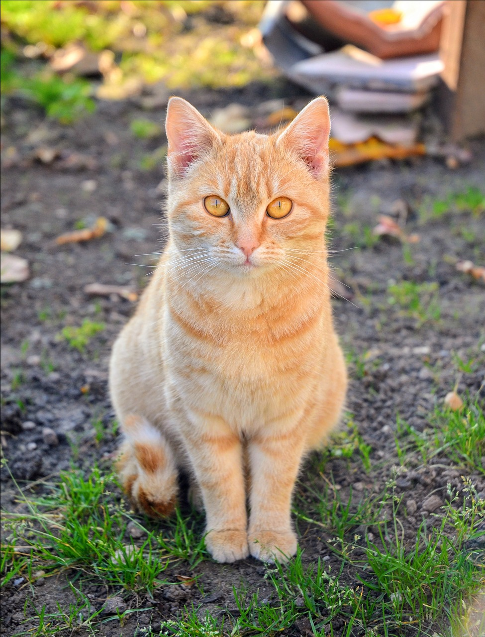 картинки желтого котика вот вас