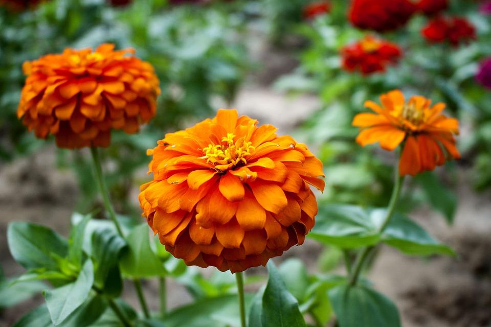 Güneş çiçek Güzel çiçekler Pixabayde ücretsiz Fotoğraf