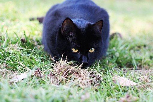 veľké čierne vtáky čierna mačička