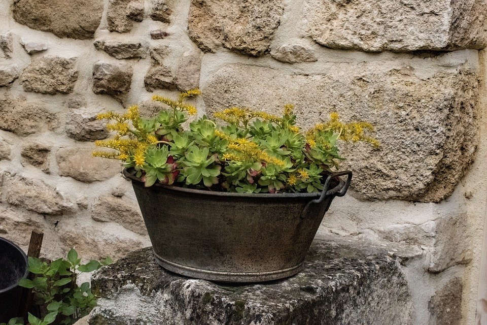 Décor De Jardin Plante En Pot Photo Gratuite Sur Pixabay