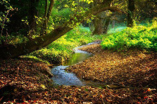 2,000+ Free Jungle & Nature Images - Pixabay