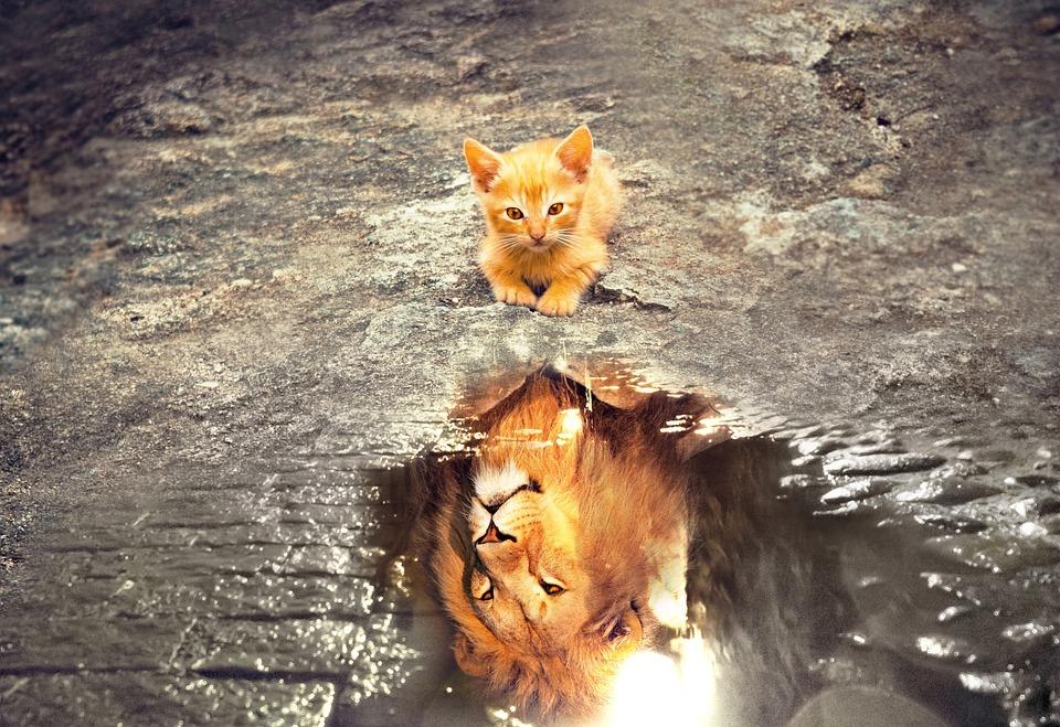 猫, ライオン, 黄褐色の, リフレクション, 水, 夢, ファンタジー