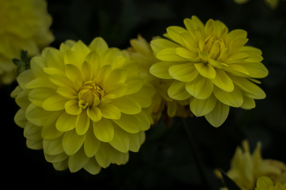 Flowers nature yellow free photo on pixabay flowers nature yellow flowers mightylinksfo