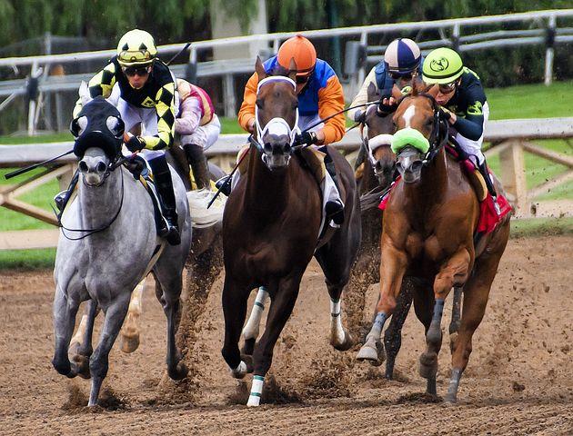 Pferde, Rennsport, Rennen, Pferd, Tier