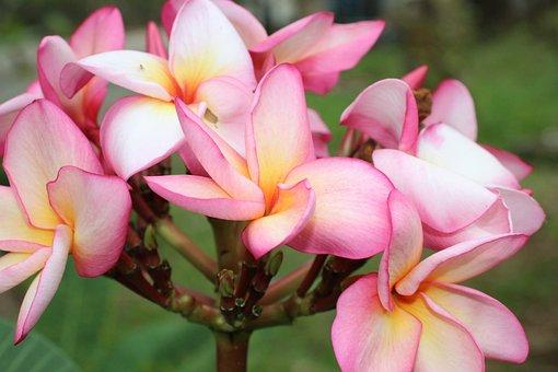 Fleurs Tropiques Photos Pixabay Telechargez Des Images Gratuites