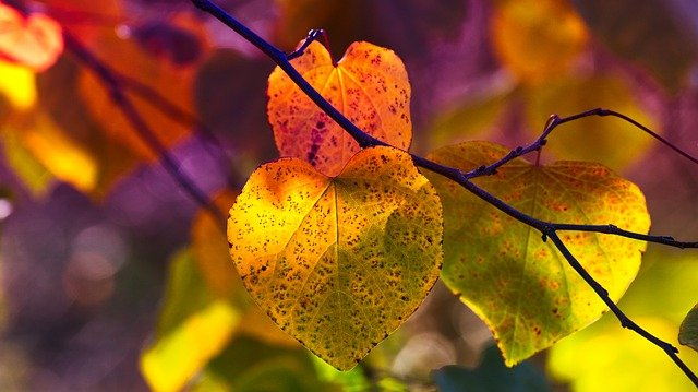 autumn leaves mood fall color
