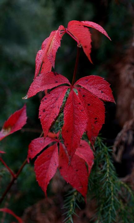 Daun Merah Musim Gugur Foto Gratis Di Pixabay