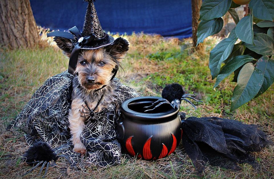 Perro humanizado con disfraz de Halloween