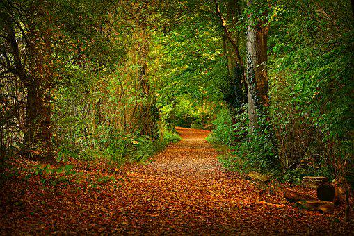 Forest Path, Woodland, Tree, Leaves