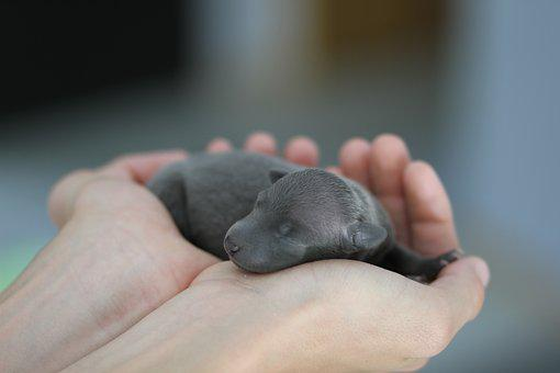 Newborn, Puppy, Cute, Mammal, Baby