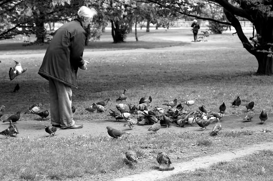 Pigeons Park The Old Man - Free photo on Pixabay