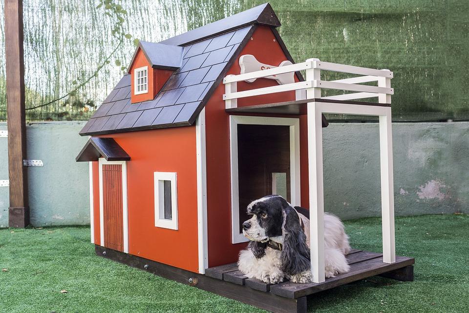 Cucce Per Animali Domestici Cane Foto Gratis Su Pixabay
