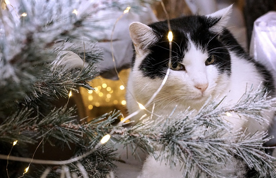 Christmas Cat Animal · Free photo on Pixabay