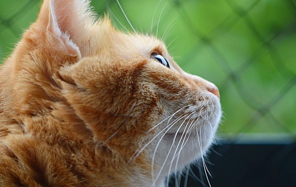 mačička pics zrelé
